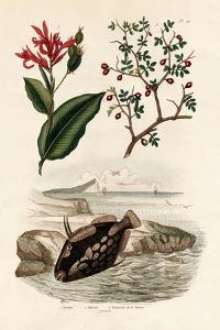 Canna, 1833-39