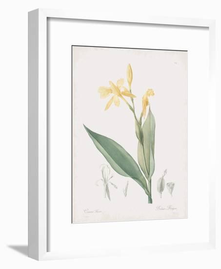 Canna Flaccida-Pierre Joseph Redoute-Framed Giclee Print