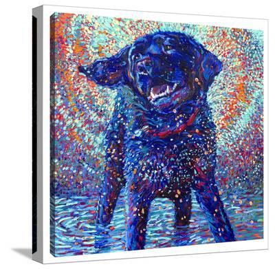 Cannines & Color-Iris Scott-Gallery Wrapped Canvas
