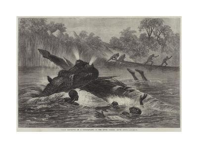 Canoe Destroyed by a Hippopotamus on the River Zambesi, South Africa--Giclee Print