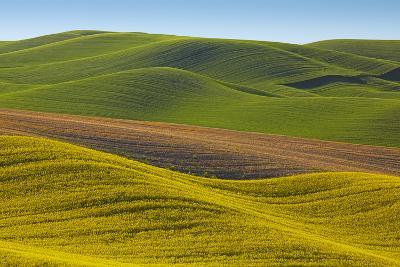 Canola Fields and Wheat, Palouse, Whitman County, Washington, USA-Charles Gurche-Photographic Print