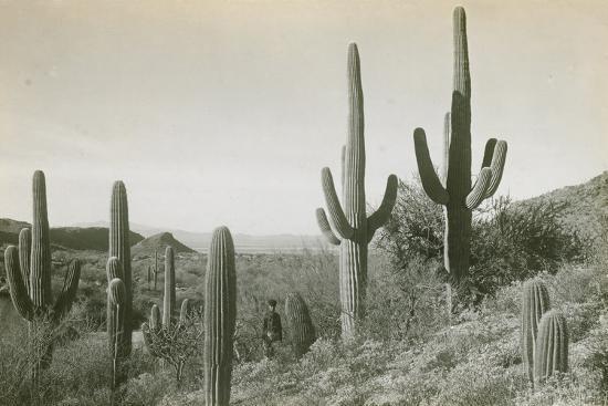 Canon des Coches, Tortolita Mountains, USA-D. T. MacDougal-Photographic Print