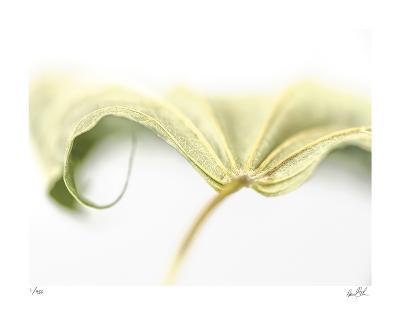 Canopy II-Daniel Sroka-Giclee Print