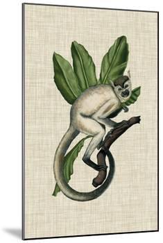 Canopy Monkey IV-Naomi McCavitt-Mounted Art Print