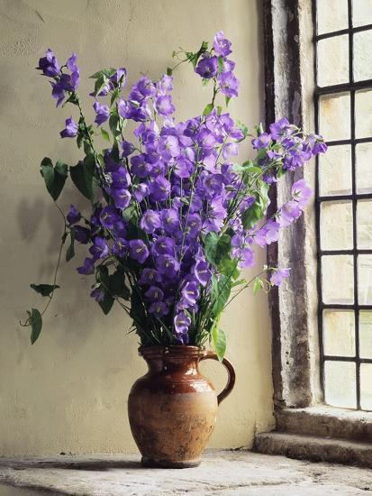 Canterbury Bells-Clay Perry-Photographic Print