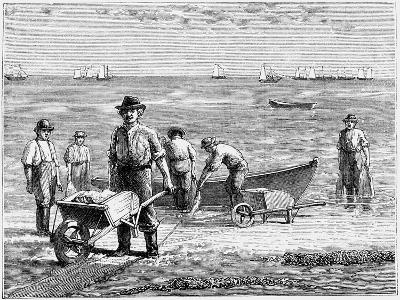 Cape Cod Fisherman Washing Fish, 1875--Giclee Print