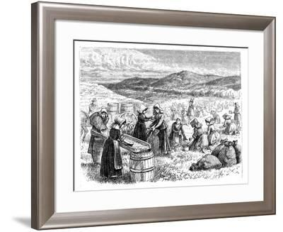Cape Cod Women Picking and Sorting Cranberries, 1875--Framed Giclee Print