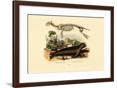 Cape Fur Seal, 1833-39--Framed Giclee Print