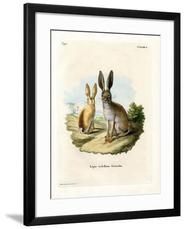 Cape Hare--Framed Giclee Print