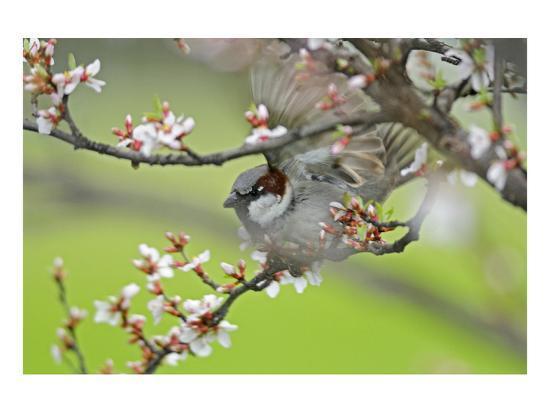 Cape May Warbler-Mike Grandmaison-Art Print