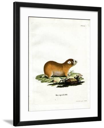 Cape Mole Rat--Framed Giclee Print