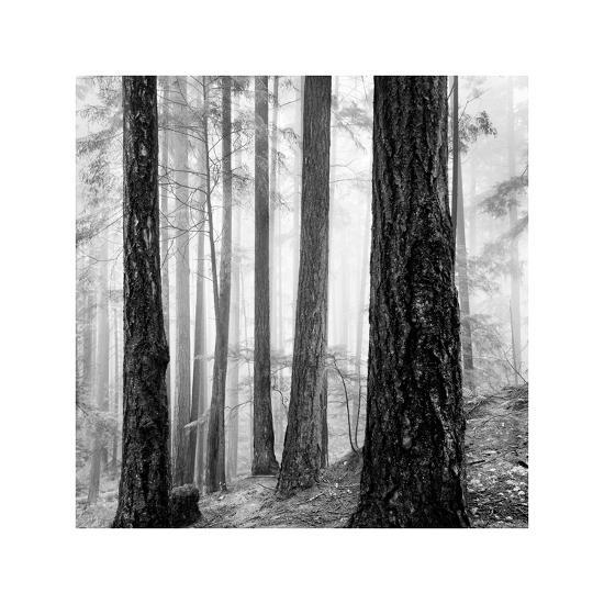 Capilano Forest-Lsh-Giclee Print