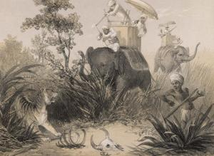 British in India Shooting a Tiger from Elephants by Captain G.f. Atkinson