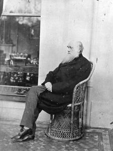 Charles Darwin (B/W Photo) by Captain L. Darwin