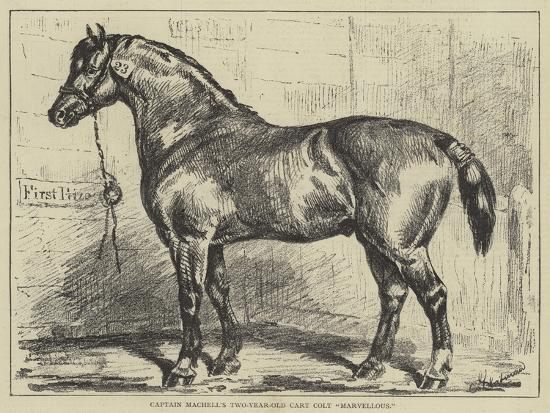 Captain Machell's Two-Year-Old Cart Colt Marvellous--Giclee Print