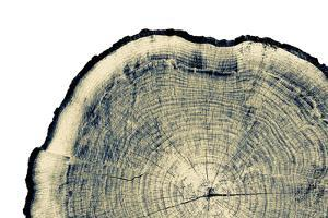 Vintage Neutral Monotone Piece of round Wood from a Large Tree. Rough Textured Surface with Rings, by captureandcompose