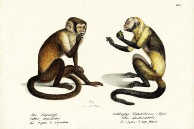 Capuchin Monkey, 1824-Karl Joseph Brodtmann-Giclee Print