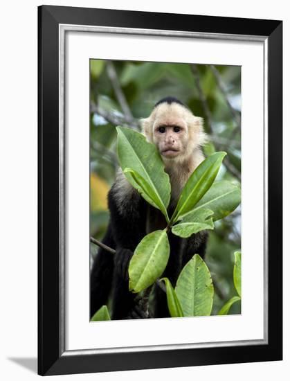 Capuchin Monkey I-Larry Malvin-Framed Photographic Print