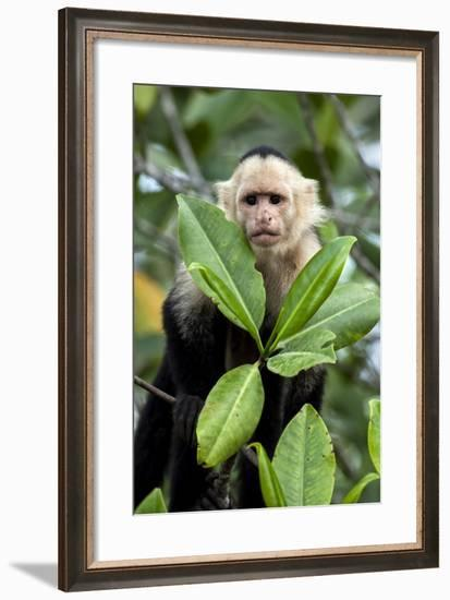 Capuchin Monkey I-Larry Malvin-Framed Photographic Print