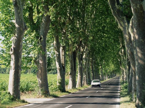 Car on Typical Tree Lined Country Road, Near Pezenas, Herault, Languedoc-Roussillon, France-Ruth Tomlinson-Photographic Print
