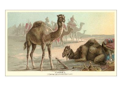 Caravan of Camels--Art Print