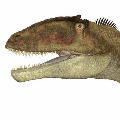 Carcharodontosaurus Dinosaur Head-Stocktrek Images-Art Print