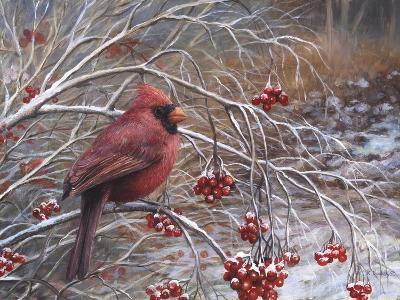 Cardinal and Berries-Kevin Dodds-Giclee Print
