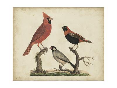 Cardinal and Grosbeak-Friedrich Strack-Art Print