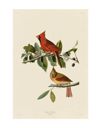 https://imgc.artprintimages.com/img/print/cardinal-grosbeak_u-l-f8cdvi0.jpg?p=0