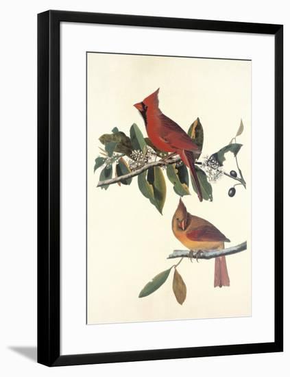 Cardinal Grosbeak-John James Audubon-Framed Premium Giclee Print
