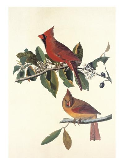 Cardinal Grosbeak-John James Audubon-Art Print