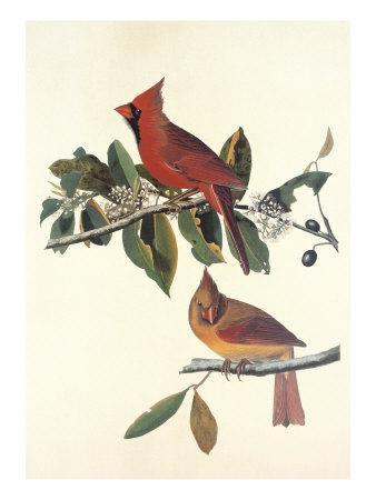 https://imgc.artprintimages.com/img/print/cardinal-grosbeak_u-l-p9d5kl0.jpg?p=0