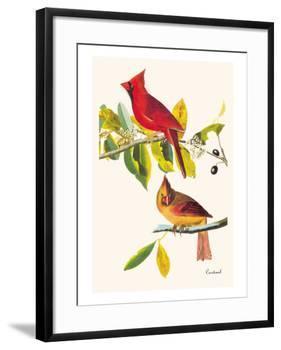 Cardinal-John James Audubon-Framed Art Print