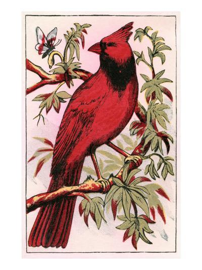 Cardinal--Art Print