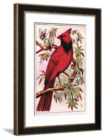 Cardinal--Framed Art Print