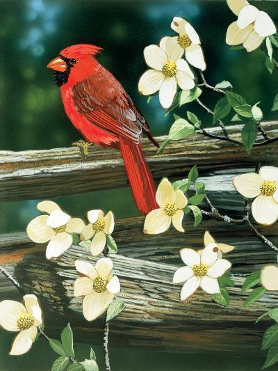 Cardinal-William Vanderdasson-Giclee Print