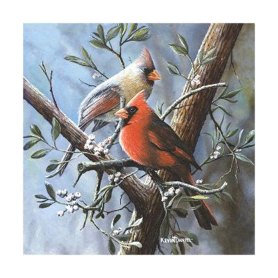Cardinal-Kevin Daniel-Art Print