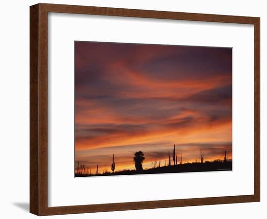 Cardon Cactus and Palm Tree Silhouette at Sunset, Baja California, Mexico-Jurgen Freund-Framed Photographic Print