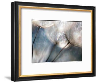 Carefree-Ursula Abresch-Framed Photographic Print