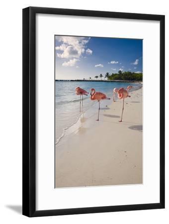 Caribbean Beach With Pink Flamingos, Aruba-George Oze-Framed Photographic Print