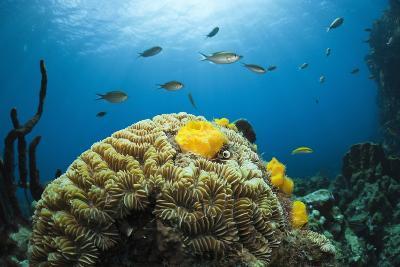 Caribbean Coral Reef-Reinhard Dirscherl-Photographic Print