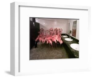 Caribbean Flamingos from Miami's Metrozoo Crowd into the Men's Bathroom