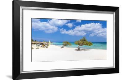 Caribbean, Netherland Antilles, Aruba, Divi Divi Trees on Eagle Beach-Jane Sweeney-Framed Photographic Print