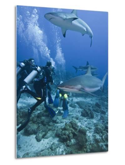 Caribbean Reef Shark (Carcharhinus Perezii) Swimming with Divers, Roatan, Bay Islands, Honduras-Antonio Busiello-Metal Print