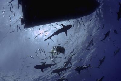 Caribbean Reef Sharks Circling a Dive Boat, Nassau, the Bahamas-Stocktrek Images-Photographic Print