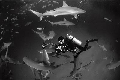 Caribbean Reef Sharks Swimming in a Frenzy around an Underwater Photographer-Jennifer Hayes-Photographic Print