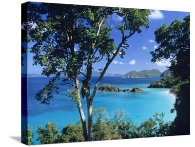 Caribbean seen through trees, Virgin Islands National Park-Tim Fitzharris-Stretched Canvas Print