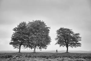 Countryside Stroll by Carina Okula