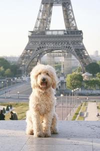 Have Dog, Will Travel by Carina Okula