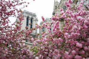 Notre Dame 1 by Carina Okula